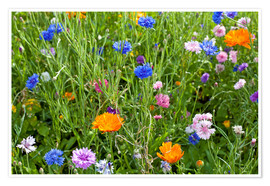 Poster Premium Wild flower meadow