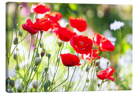 Stampa su tela  Red poppies on a sunny day