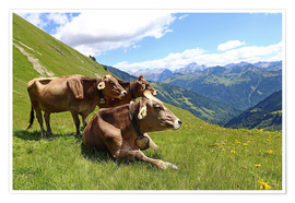 Poster Premium  Cows relax on the mountain
