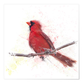 Poster Premium Male Northern Cardinal