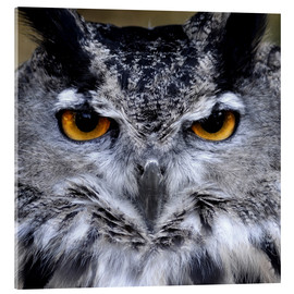 Stampa su vetro acrilico  Great Horned Owl