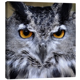 Stampa su tela  Great Horned Owl