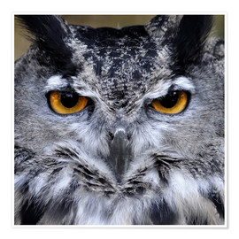 Poster Premium  Great Horned Owl