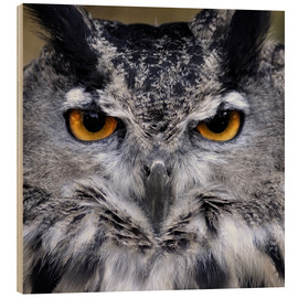 Stampa su legno  Great Horned Owl