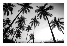 Poster  Silhouettes of palm trees