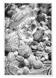 Poster Shells under water