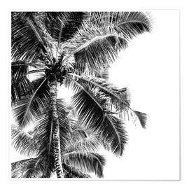 Poster  High palms on a tropical beach