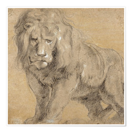 Poster Premium  Study of a lion - Peter Paul Rubens