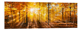 Forex  Autumnal forest panorama in sunlight - Jan Christopher Becke