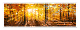 Poster Premium  Autumnal forest panorama in sunlight - Jan Christopher Becke