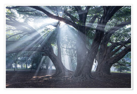 Poster Premium Light rays at sunrise in a forest