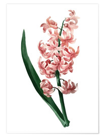 Poster Premium Orient Red Hyacinth