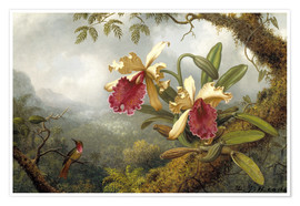 Poster Premium  orchids and hummingbird - Martin Johnson Heade
