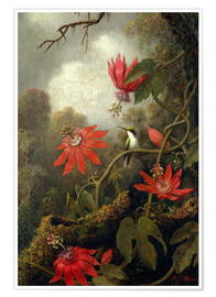 Poster Premium  Hummingbird and Passionflowers - Martin Johnson Heade