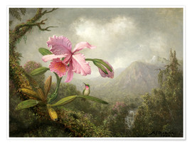 Poster Premium  Orchid and Hummingbird - Martin Johnson Heade