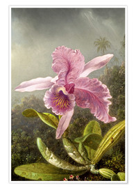 Poster Premium  Hummingbird and orchid (detail) - Martin Johnson Heade