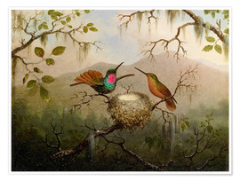 Poster Premium  Two hummingbirds at their nest - Martin Johnson Heade