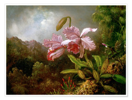 Poster Premium  Orchids in a Jungle - Martin Johnson Heade