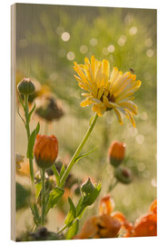 Stampa su legno  Yellow and orange flowers in the morning - Edith Albuschat