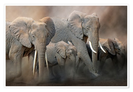 Poster Premium A group of elephants