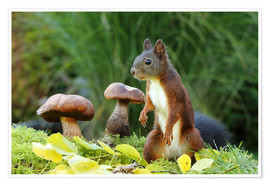 Poster Premium  Squirrel on fodder search - Uwe Fuchs