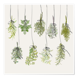 Poster Premium  Herb bouquets