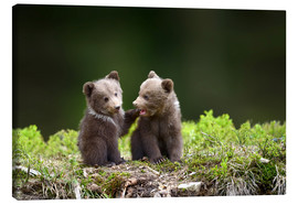Stampa su tela  Two young brown bears