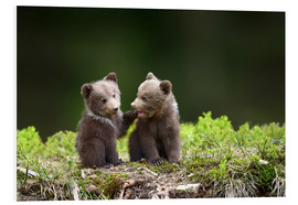 Stampa su PVC  Two young brown bears