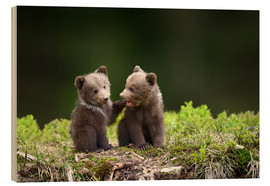 Stampa su legno  Two young brown bears