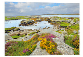 Forex  Ireland Landscape with wild flowers