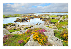 Poster Premium  Ireland Landscape with wild flowers