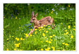 Poster Premium  Roe Deer fawn running in flower meadow, Normandy - Gérard Lacz