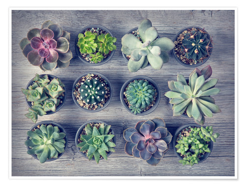 Poster Premium Different succulents above the black wooden background
