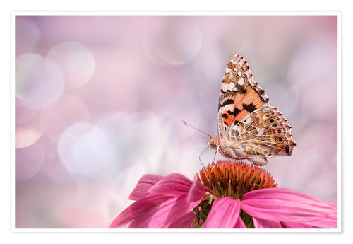 Poster Premium  Painted Lady