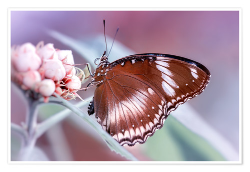 Poster Premium butterfly fragrance