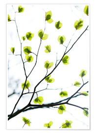 Poster Premium Signs of Spring
