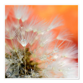 Poster Premium Dandelion magic