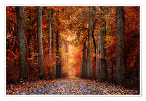 Poster Premium Red Forest