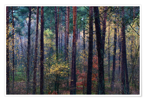 Poster Premium Colorful autumn forest