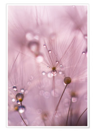 Poster Premium Dewdrops on a dandelion seed