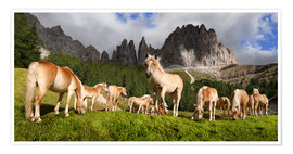 Poster Premium Haflinger horses in a meadow in front of the Rosengarten Mountains