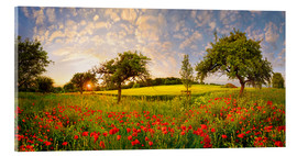 Vetro acrilico  Poppies field with fruit trees at sunset - Michael Rucker