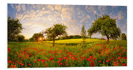 Michael Rucker - Poppies field with fruit trees at sunset