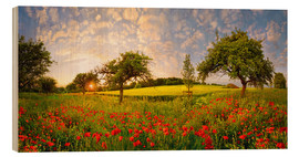 Legno  Poppies field with fruit trees at sunset - Michael Rucker