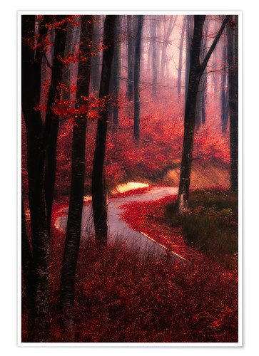 Poster Premium forest glow
