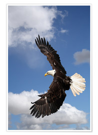 Poster Premium  Freedom on eagle wings