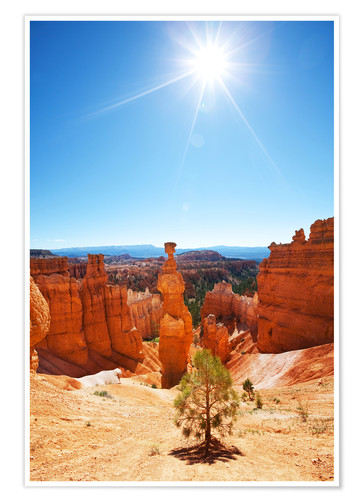 Poster Premium Lonely tree in Bryce Canyon