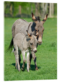 Stampa su vetro acrilico  Donkey mum and her little baby