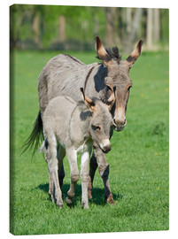 Stampa su tela  Donkey mum and her little baby