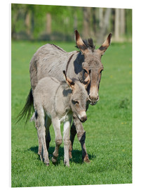 Forex  Donkey mum and her little baby
